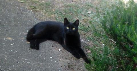 Kat, zwartje